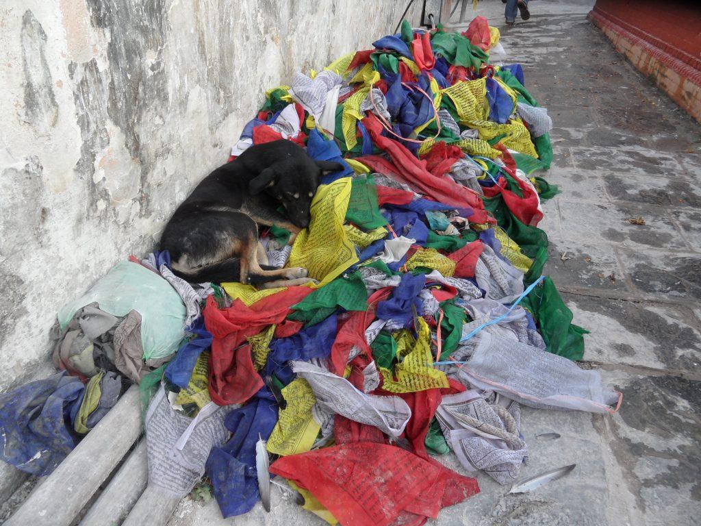 Nepal, heeft deze hond een boeddhanatuur? Foto Dick Verstegen/Ellen Deimann.