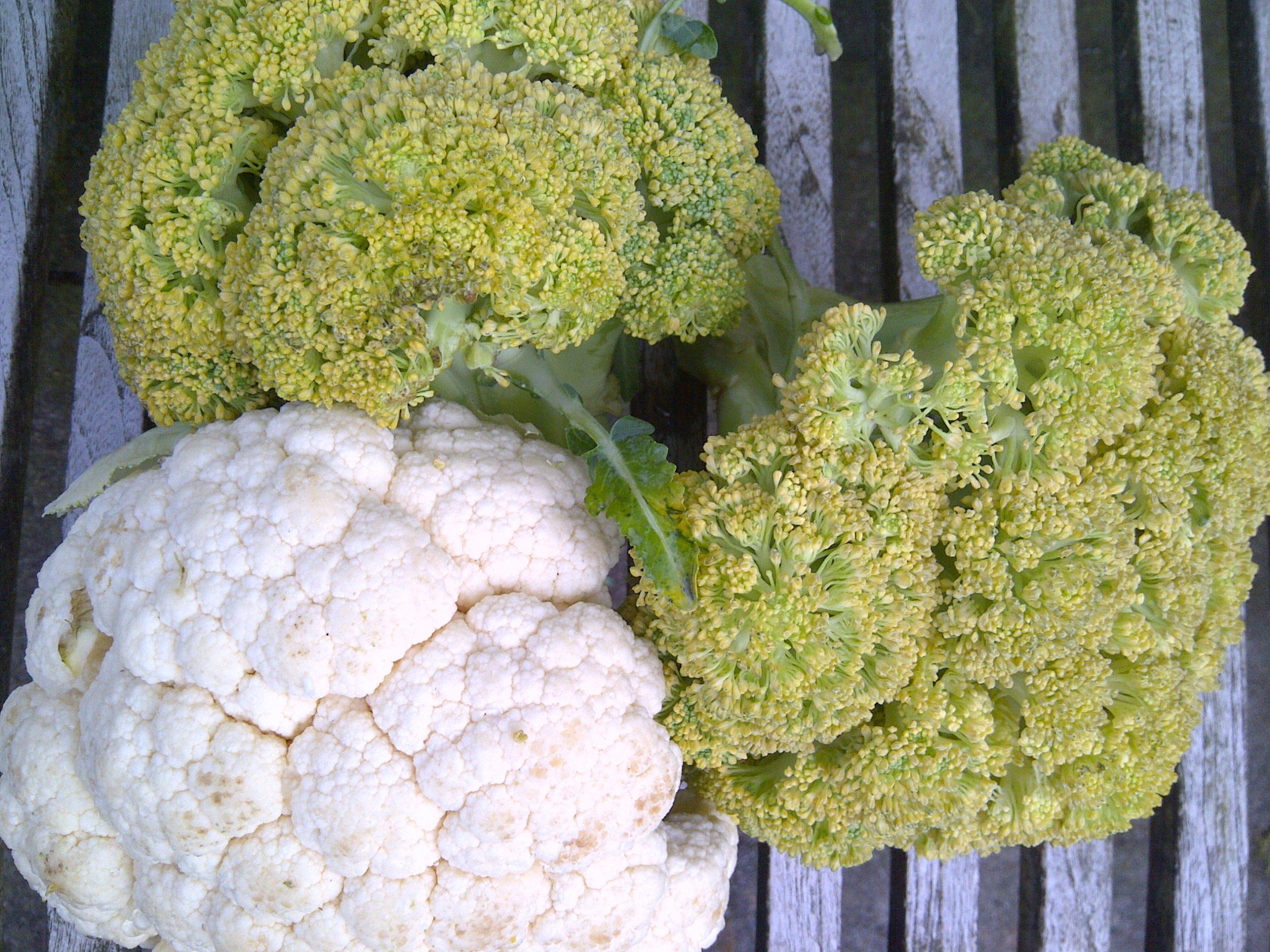Beter bloemkool en broccoli 1 mei 2014
