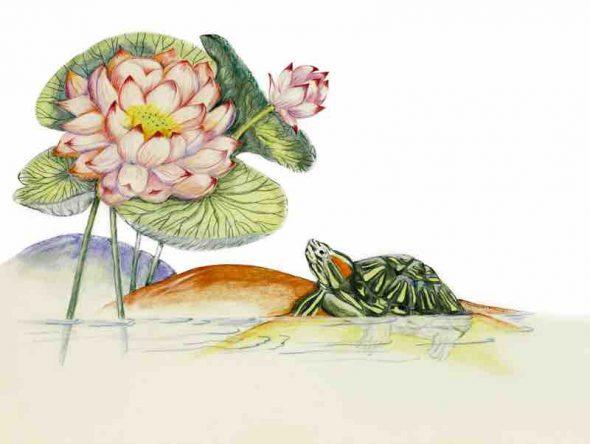 Paula Kuitenbrouwer Lotuswithtortoise