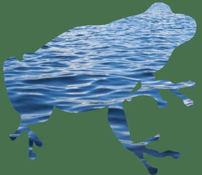 Kikker met een lijf van water